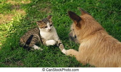 the battle of a dog and a cat - The battle of a dog and a...