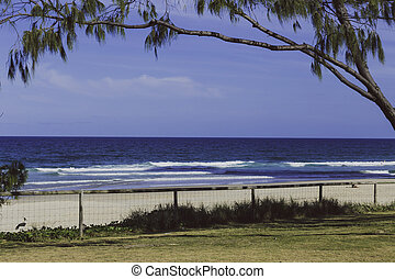 the beach and landscape in Surfers Paradise on the Gold Coast