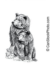 Pen and ink hand drawn illustration of two bears on a white background.