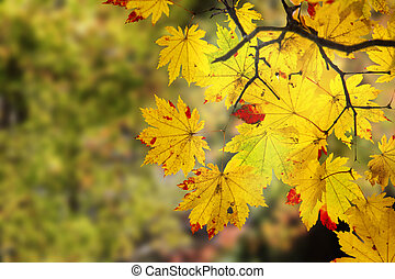 beautiful branch with nice red and yellow maple leaves