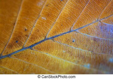 the beautiful brown tree leaves in the nature