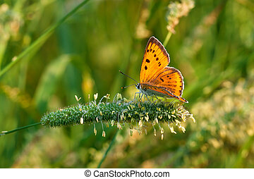 butterfly sits on green grass