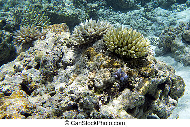 The beautiful coral reef