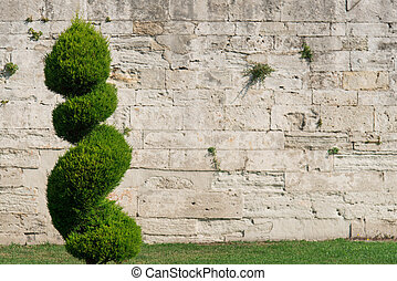 The beautiful decorative plant on the modern wall