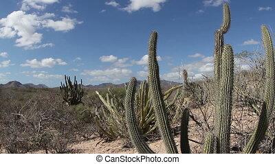 the beautiful desert landscape of baja california sur,...