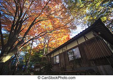 The beautiful fall season