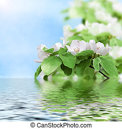 The beautiful flowering peach reflected in water