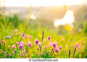 The beautiful natural landscape of summer flowers on the meadow at dawn