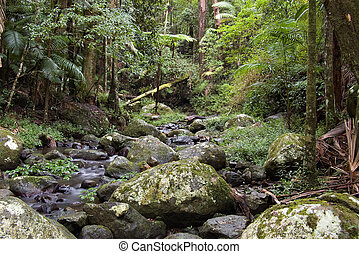 the beautiful nature of border ranges rain forest in northern nsw
