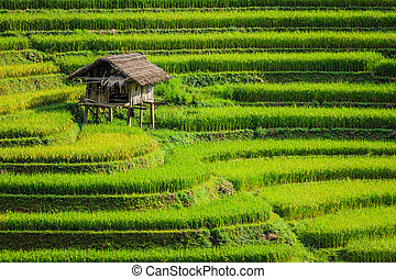 Rice terraces - The beautiful Rice terraces valley in...
