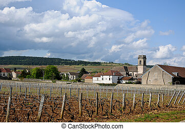 the beautiful vineyards in beaune cote de beaune where wine is produced , france