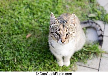 the beauty cat