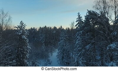 The beauty of the winter forest
