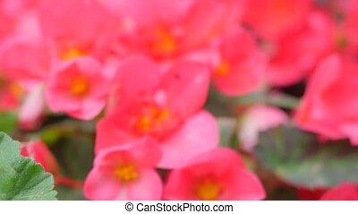 the Bed of Garden Flowers