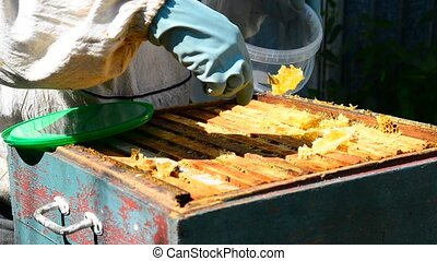 The beekeeper puts honeycomb into bucket - The beekeeper...