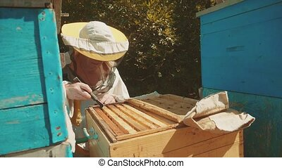 the beekeeper working in the apiary bees fly lifestyle swarm...