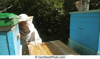 the beekeeper working in the apiary bees fly swarm multi lifestyle colored beehive slow motion video. bee-maker beekeeper man working of a smoke pipe beeper wooden hives smoker device for repelling evil bees. beekeeping concept agriculture bee