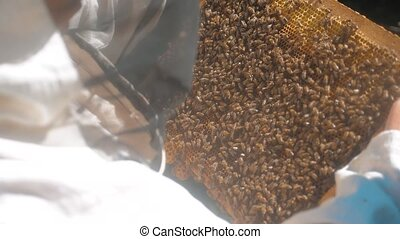 the beekeeper working in the apiary framework for honey bees fly swarm multi colored beehive slow motion video. beekeeper lifestyle holding a honeycomb full of bees. Beekeeper inspecting honeycomb frame at apiary. Beekeeping concept