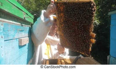 the beekeeper working in the apiary framework for honey bees...