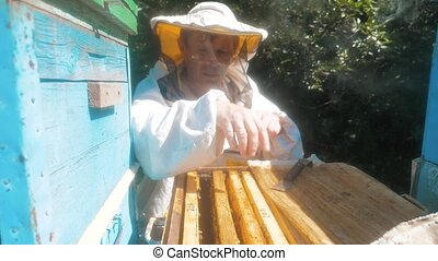 the beekeeper working in the apiary framework for honey bees fly swarm multi colored beehive slow motion video. beekeeper holding a honeycomb full of bees. Beekeeper inspecting honeycomb lifestyle frame at apiary. Beekeeping concept