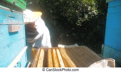 the beekeeper working in the apiary framework for honey bees fly swarm multi colored beehive slow motion video. beekeeper holding a honeycomb full of bees. Beekeeper inspecting honeycomb frame at lifestyle apiary. Beekeeping concept