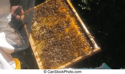 the beekeeper working in the apiary framework for honey bees fly swarm multi colored beehive slow motion video. beekeeper holding a honeycomb full of bees. Beekeeper inspecting honeycomb frame at apiary. Beekeeping concept lifestyle