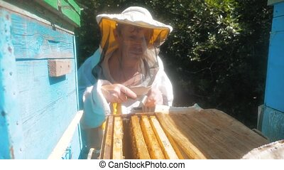 the beekeeper working in the apiary framework for honey bees fly swarm multi colored beehive slow motion video. beekeeper holding a honeycomb full of bees. Beekeeper inspecting honeycomb frame at apiary. lifestyle Beekeeping concept