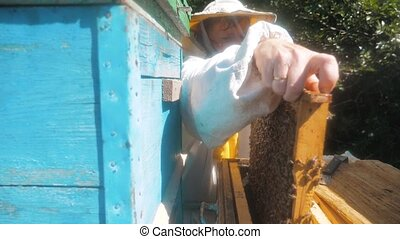 the beekeeper working in the apiary framework for honey bees fly swarm multi colored beehive slow motion video. beekeeper holding a honeycomb full of bees. Beekeeper inspecting lifestyle honeycomb frame at apiary. Beekeeping concept
