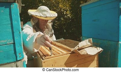 the beekeeper working in the apiary lifestyle bees fly swarm...