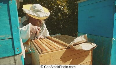 the beekeeper working lifestyle in the apiary bees fly swarm...