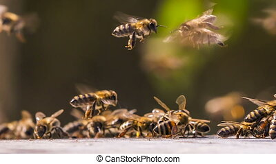The bees gathered in the group. - The bees gathered in a...