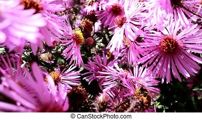 The bees have adapted to feed on nectar and pollen