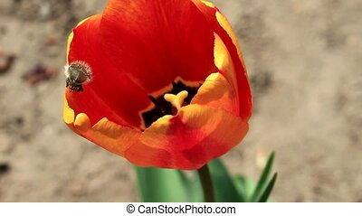 The beetle creeps on the flower