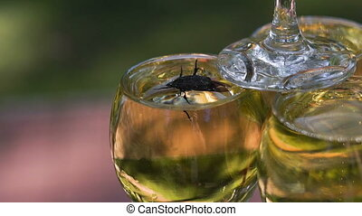The beetle got into the wine glass with champagne and tries to get out. The insect was trapped, it was attracted by the sweet aromas of the drink.
