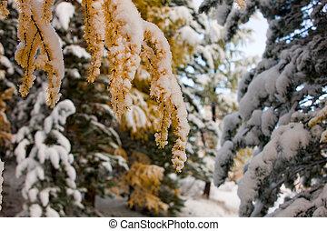 The beginning of winter
