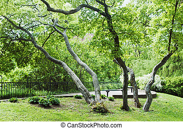 The bent trees in spring park