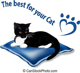 the best for your cat
