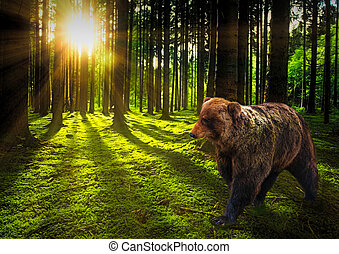 Big bear in the woods at sunset