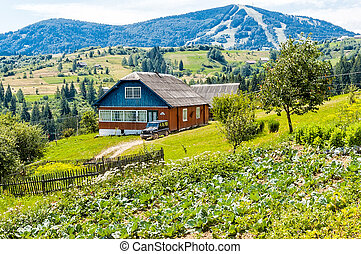"""A typical """"Dacha"""" in the ukrainian Carpathians, and a field of cabbage"""
