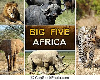 The Big Five - Lion, Elephant, Leopard, Bufallo and ...