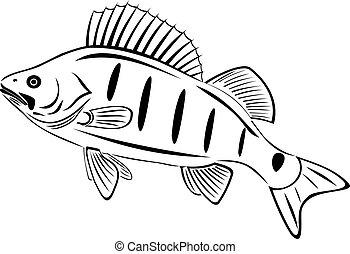 The big perch. River fish