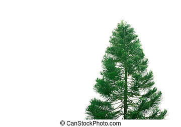 the big tree isolated on white background