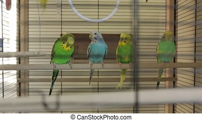 The parrots the bird cage