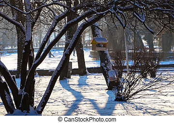 the bird feeder on the tree in the Park winter landscape