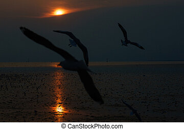 the bird flying to sky on the sunset at beautiful.