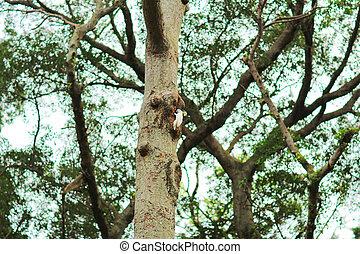 the bird on branch hk