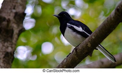 the bird perched on a branch