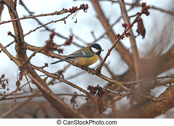 The bird tit sits on a tree.