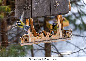 the birds in the feeder