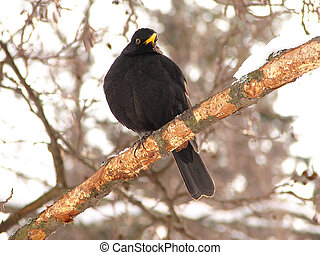The black bird sits on a branch